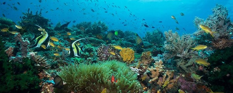 Coral reef in Sogod Bay
