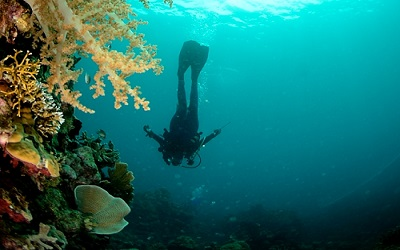 Scuba diver on wall